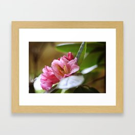 Pretty in Pink4 Framed Art Print