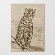 Ocelot Watching, by Ave Hurley Canvas Print