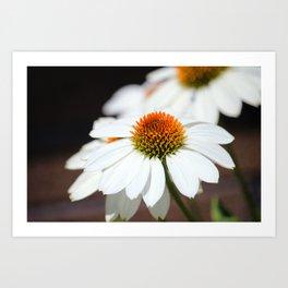 Macro White Coneflowers Art Print