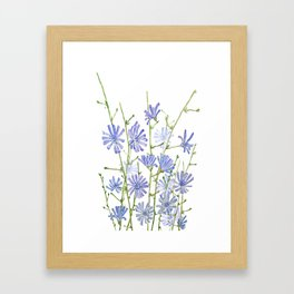 blue chicory watercolor Framed Art Print