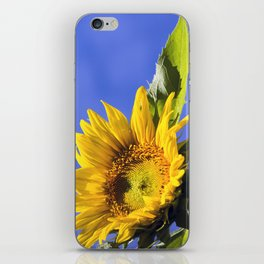 Giant Sunflower iPhone Skin