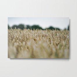 Grainfield, Shallow depth of field - Marrum - Friesland, The Netherlands Metal Print
