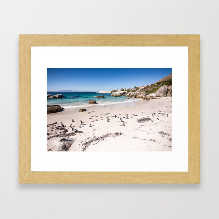 Penguins on Boulders Beach in Cape Town, South Africa Framed Art Print