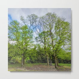 The six trees Metal Print