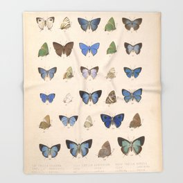 Vintage Hand Drawn Scientific Illustration Insects Butterfly Anatomy Colorful Wings Throw Blanket