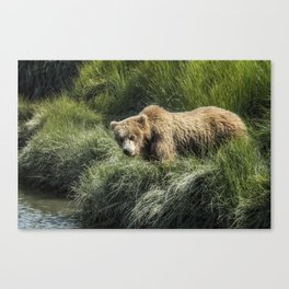 Munching Grass by the Stream Canvas Print