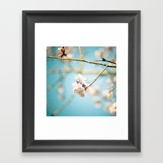 Cherry Blossom, Pink Flowers and Blue Sky. Framed Art Print