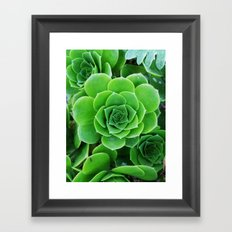 Green Succulents Framed Art Print