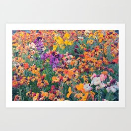 COLOUR POP // SPRING FLOWERS  Art Print