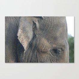 Elephant #1 Canvas Print
