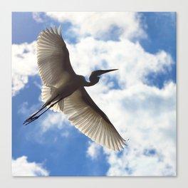 Egret in flight Canvas Print