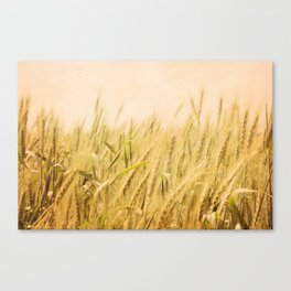 Wild Wheat Canvas Print