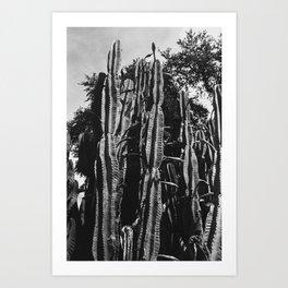 Angry Cactus Art Print