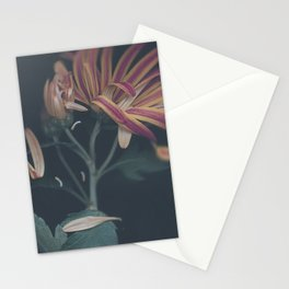 Ripen Stationery Cards