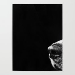 Sneaky Dog Poster