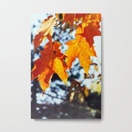 Fall Foliage #3 Metal Print