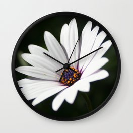 Daisy flower blooming close-up Wall Clock