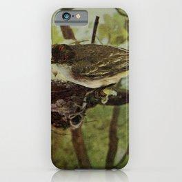 Vintage Print - Birds and Nature (1904) - Kingbird iPhone Case