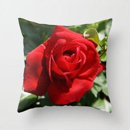 Beautiful Climbing Red Rose Close Up Photograph Throw Pillow