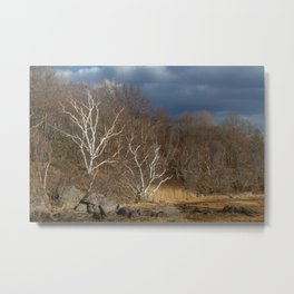 Moody Forest Birch Trees Metal Print