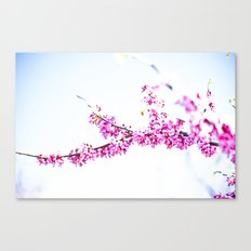 Spring has come 3 Canvas Print