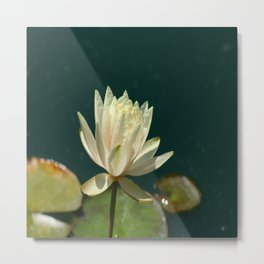 Carolina Sunset Waterlily Metal Print