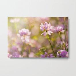 Wild pink Clover or Trifolium flowers Metal Print