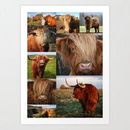 Highlander - Highland Cows - Highland Cattle Art Print