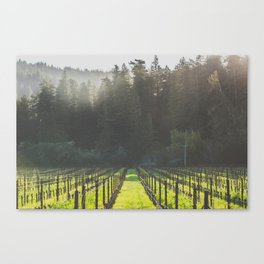 Anderson Valley Vineyard #4 Canvas Print
