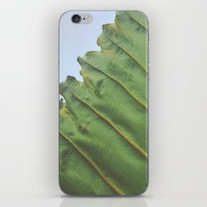 One Big Leaf iPhone & iPod Skin