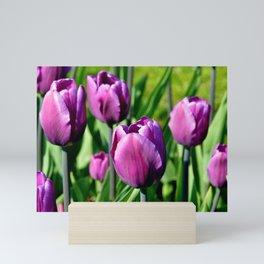 Purple Tulips Mini Art Print