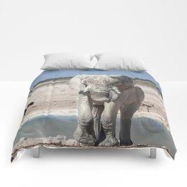 Animal Kingdom 5 Comforters