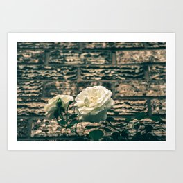 The moody garden flowers Art Print