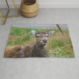 The young Highland Deer - Loch Arkaig, Highlands of Scotland - 2019 Rug