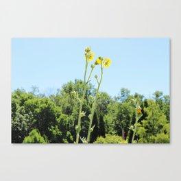 Yellow Flower Blue Sky Canvas Print