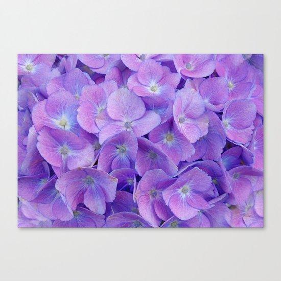Hydrangea lilac Canvas Print