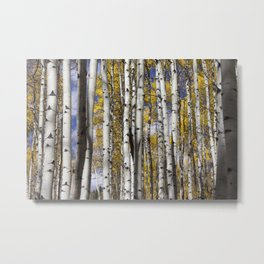 Aspen in the Fall Metal Print