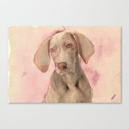 Pointer dog Canvas Print