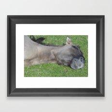 Grinning Horse Framed Art Print