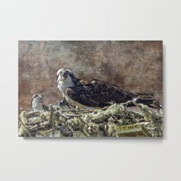 Osprey and Young - Feeding Metal Print