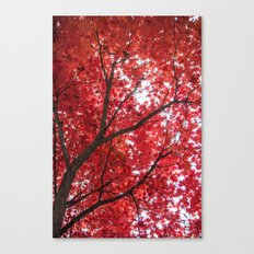 blazing red Canvas Print