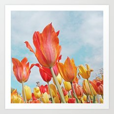 Tulip delight! Art Print