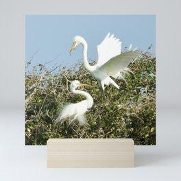 Bird Series: Nesting Great Egrets Mini Art Print