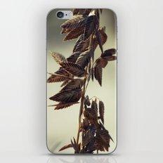 Through the Sand iPhone & iPod Skin