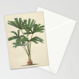 ANTIQUE BOTANICAL PALMS Stationery Cards