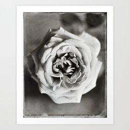 Classic Rose Tintype Art Print
