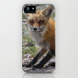 Itchy Fox iPhone Case