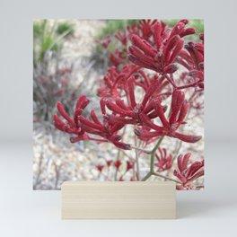 Red Kangaroo Paw Mini Art Print