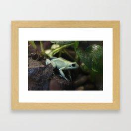 Mint Terribilis Poison Dart Frog Framed Art Print