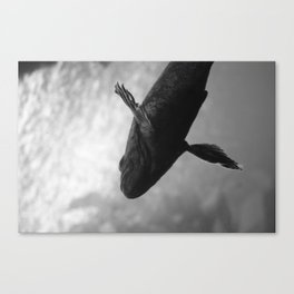 Fish 1 Canvas Print